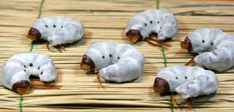 かぶと虫の幼虫チョコレート
