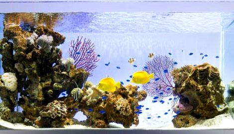 水槽で優雅に泳ぐ海水魚
