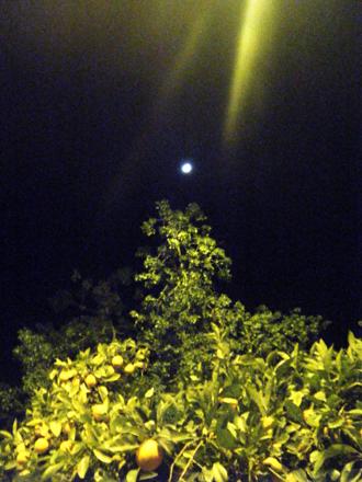 orenge jagaranda moon