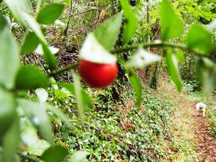 赤い実とリサス