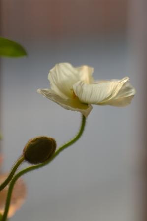 花はHっぽいと思うのは私だけでしょうか(苦笑)