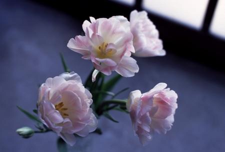 花屋のチューリップはもう終わり