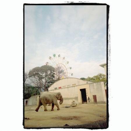 動物園はなんだか悲しく感じてしまう場所