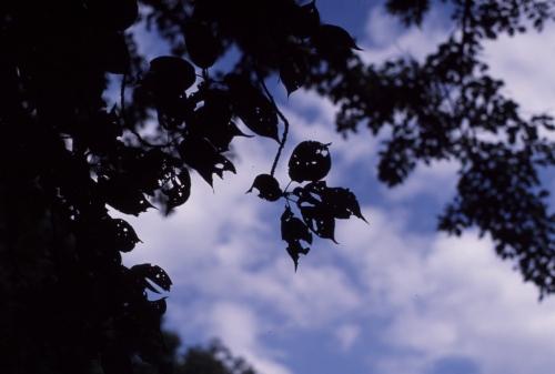 2日目のきれいな青空