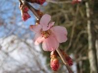 06_04_07 開花!