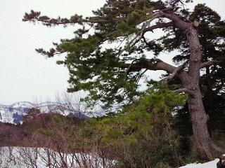 春日山散策