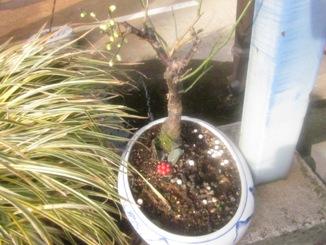 盆栽を日光浴させる