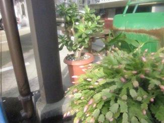 盆栽を日光浴させて元気に