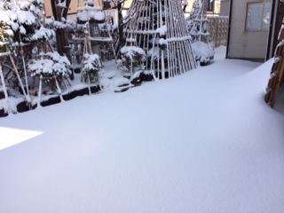 高田の雪模様