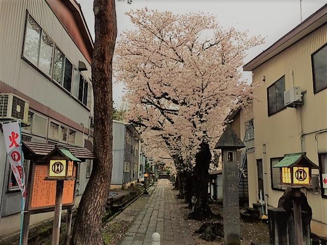 陀羅尼八幡神社の桜