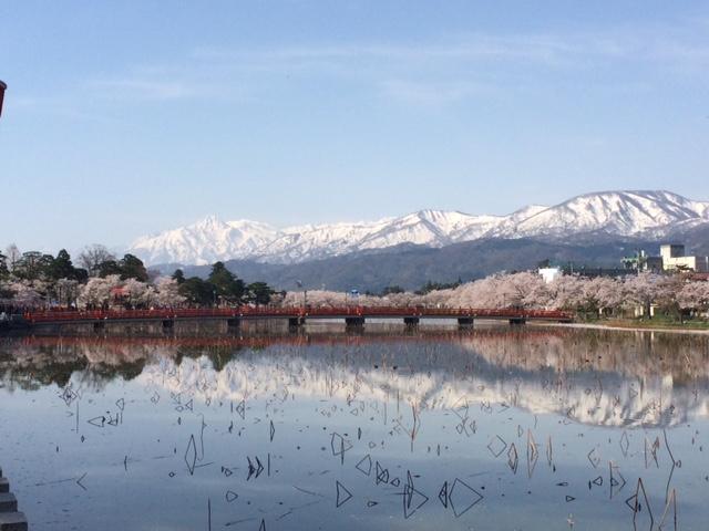青田川沿い