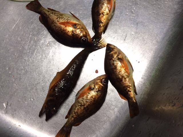 釣りの収穫