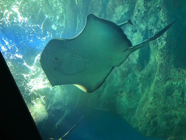 マリンピア水族館
