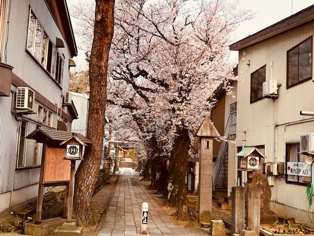陀羅尼神社の桜