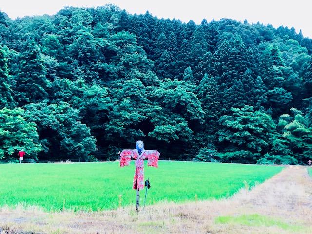 正善寺紫陽花