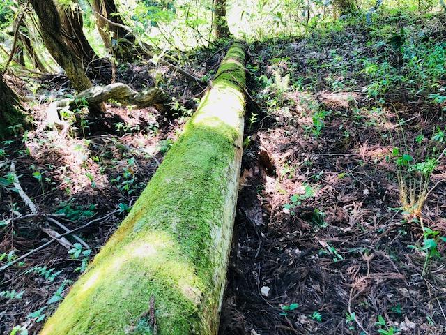 竹の子狩り