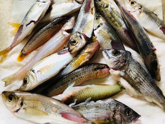 魚釣りの成果