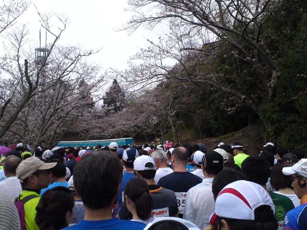 掛川マラソン1