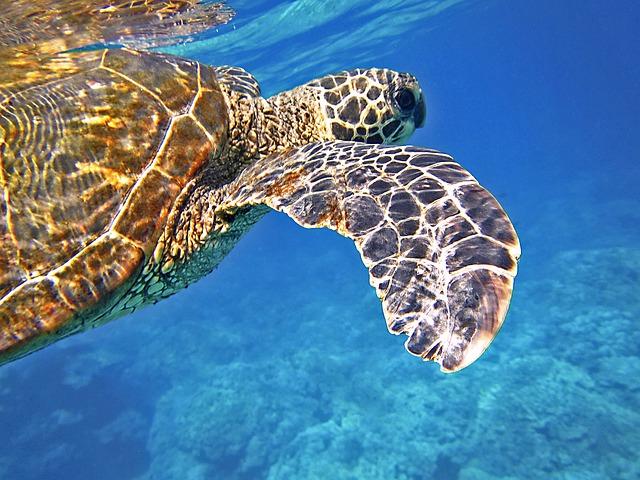 sea-turtle-547163_640.jpg