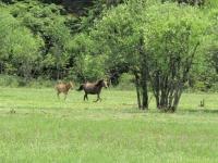 馬.普達措公園