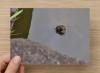 ポストカード「カメラ目線のクサガメ」