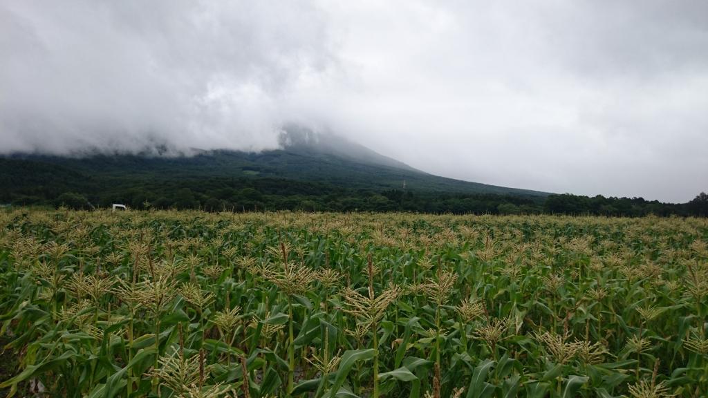 滝吉農園さんの嶽きみ畑