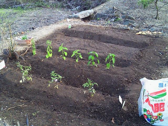 オイラのプチ菜園