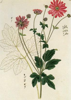 川原慶賀の画像 p1_10