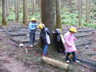 小学生森林見学