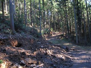 分木裏・間伐、作業道