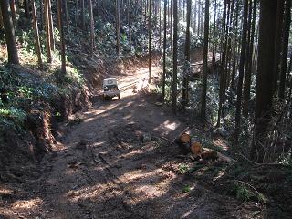 分木裏・間伐、作業道−1