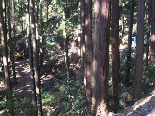 分木裏・間伐、作業道−2