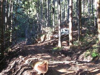分木裏・間伐、作業道−5