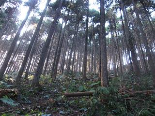 分木裏・間伐、作業道−6