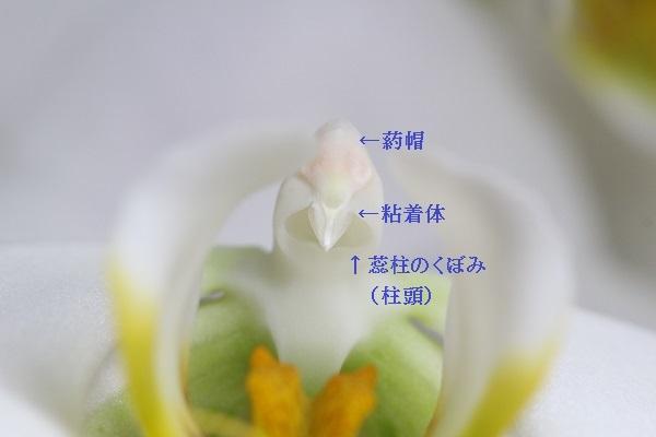 5-19 (6) - コピー.JPG