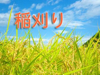 稲刈り201808