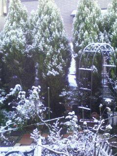 うちの庭です・・・