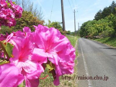 花と道路に誘われて。