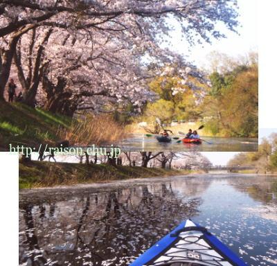 桜、カヤック、良い天気。最高の字間。