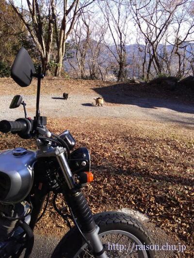 山の中の猫さん達。