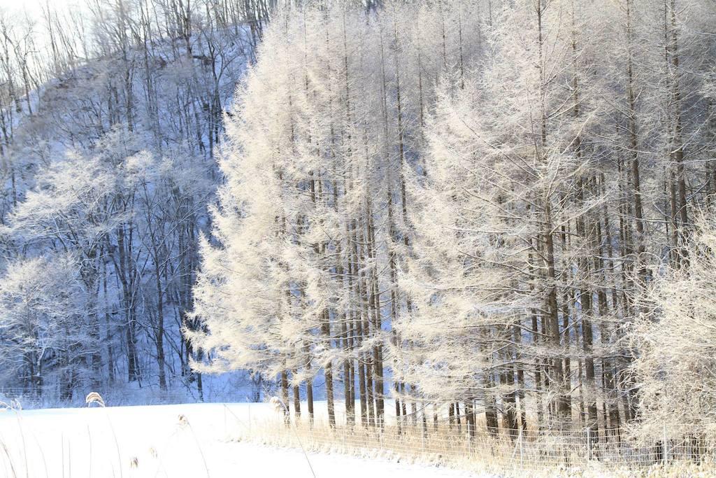 穂別の樹氷1