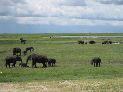 チョベ国立公園