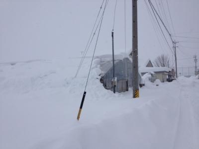圃場の雪の様子