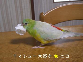 20080430鳥1