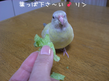 20080430鳥2
