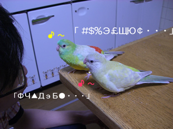20080430鳥3