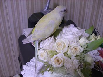 20080501鳥3