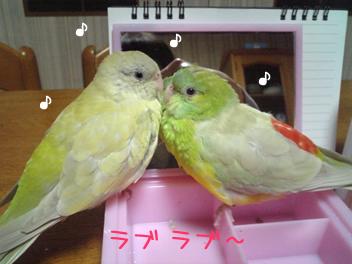 20080501鳥1