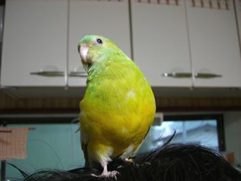 20080501鳥2