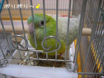 20080502鳥1